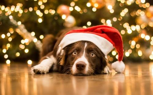 Поздравления с Новым 2017 Годом Собаки