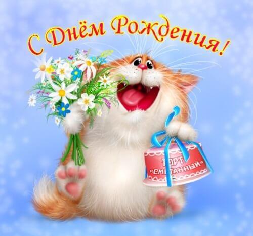 Поздравление с днем рождения, Кот